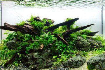Tips Merawat Aquarium